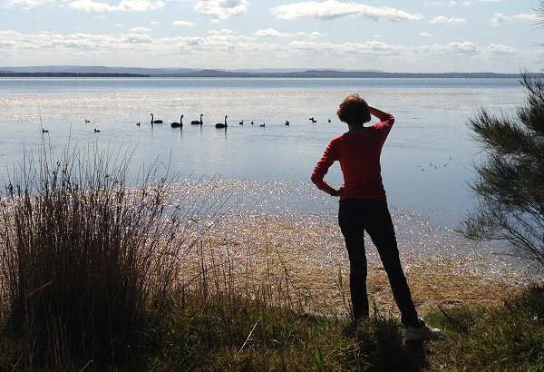 Photo Black swans on Tuggerah Lake