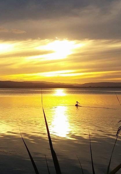 Tuggerah Lake sunset photo