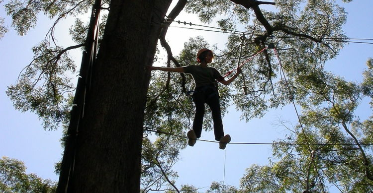 Treetop Adventure Park photo